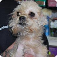Adopt A Pet :: Ellie - Brooklyn, NY