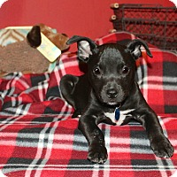 Adopt A Pet :: Phillipa - Los Angeles, CA