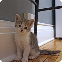 Adopt A Pet :: Magdalena - Mississauga, Ontario, ON