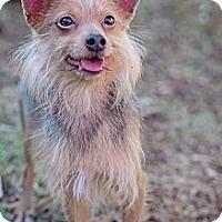 Adopt A Pet :: Jax - Sherman Oaks, CA