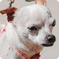 Adopt A Pet :: JOSEPHINA (LM) - Tampa, FL