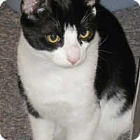 Adopt A Pet :: Victor - N. Billerica, MA