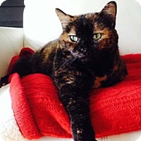Adopt A Pet :: Turtle - Verdun, QC