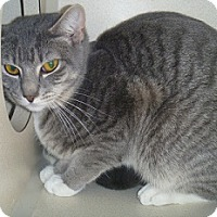 Adopt A Pet :: Beau - Hamburg, NY