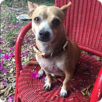 Adopt A Pet :: Commee - MIAMI, FL