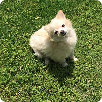 Adopt A Pet :: Kia - Waldorf, MD
