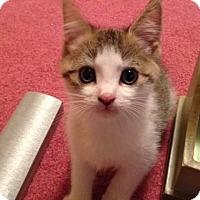 Adopt A Pet :: Bosco - Trevose, PA