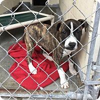 Adopt A Pet :: Cletus - Sagaponack, NY