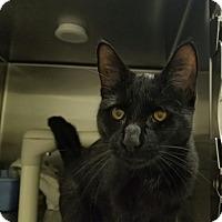 Adopt A Pet :: Olivia - Elyria, OH