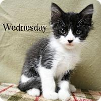 Adopt A Pet :: Wednesday - Melbourne, KY