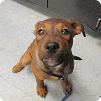 Adopt A Pet :: Bo - Warrenton, NC