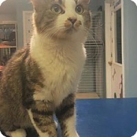 Adopt A Pet :: Kandice - Edwardsville, IL