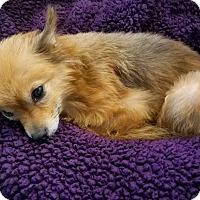 Adopt A Pet :: Roux - conroe, TX