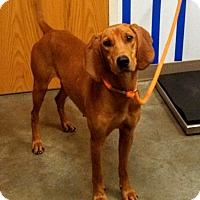 Adopt A Pet :: Florence - Ottawa, KS