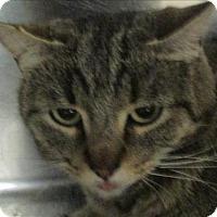 Adopt A Pet :: Mary Ann - Golden, CO