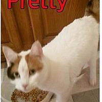 Adopt A Pet :: Pretty - Freeport, NY