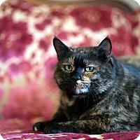 Adopt A Pet :: Tami - Boise, ID