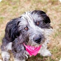 Adopt A Pet :: Jolie Gabor - Salt Lake City, UT