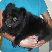 Adopt A Pet :: Dolly - Orlando, FL