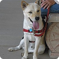 Adopt A Pet :: Cody - Wickenburg, AZ