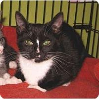 Adopt A Pet :: Trevor - Colmar, PA
