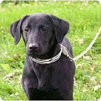 Adopt A Pet :: Phoenix - Rigaud, QC