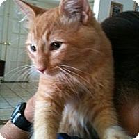Adopt A Pet :: Morris - Phoenix, AZ