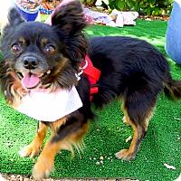 Adopt A Pet :: Chiquita 6 pounds - Sacramento, CA