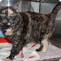 Adopt A Pet :: Maebe - Red Deer, AB