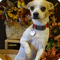 Adopt A Pet :: COOPER - Higley, AZ