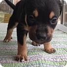 Adopt A Pet :: Georgetown HOYA s