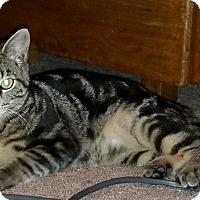 Adopt A Pet :: Charley - Raritan, NJ