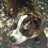 Adopt A Pet :: Cali - Littlerock, CA