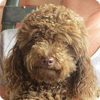 Adopt A Pet :: Harry - Westport, CT