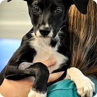 Adopt A Pet :: Jane - Gainesville, FL