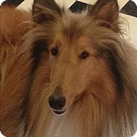 Adopt A Pet :: Zeus - Daleville, AL