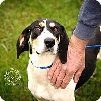 Adopt A Pet :: Fiona - RESCUED! - Zanesville, OH
