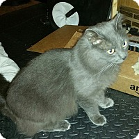 Adopt A Pet :: Remington - Great Mills, MD