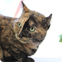 Adopt A Pet :: Gabby-Low maintenance Love - Plainville, MA