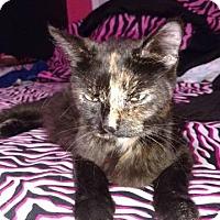 Adopt A Pet :: Cocoa - Putnam, CT