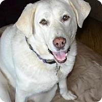 Adopt A Pet :: Sammie - Clovis, CA