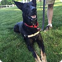 Adopt A Pet :: Cyrus - Bristol, CT