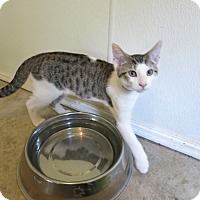 Adopt A Pet :: Rowdy - Geneseo, IL
