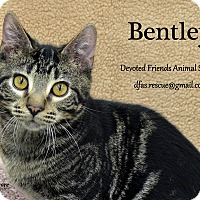 Adopt A Pet :: Bentley - Ortonville, MI