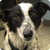 Adopt A Pet :: Kelly: Fostered - Rustburg, VA