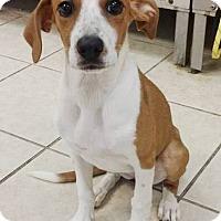 Adopt A Pet :: Natalie - Lawrenceville, GA