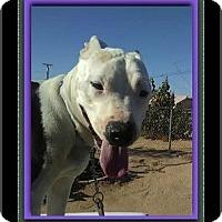 Adopt A Pet :: Simon - Encino, CA