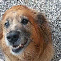 Adopt A Pet :: RUTHIE - Missoula, MT