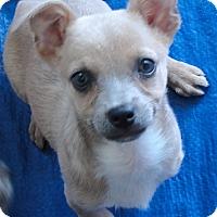 Adopt A Pet :: Daisy - Buena Park, CA