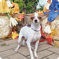 Adopt A Pet :: Leala - West Chicago, IL
